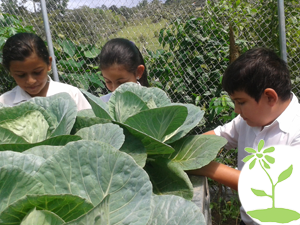 Costa Rica – Biolley School Garden